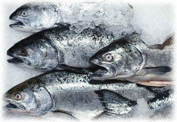 холодильное оборудование для рыбной промышленности